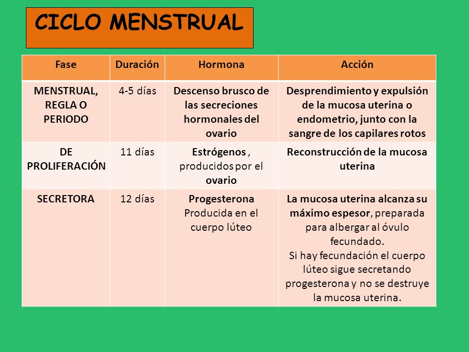 CICLO MENSTRUAL FaseDuraciónHormonaAcción MENSTRUAL, REGLA O PERIODO 4-5 díasDescenso brusco de las secreciones hormonales del ovario Desprendimiento
