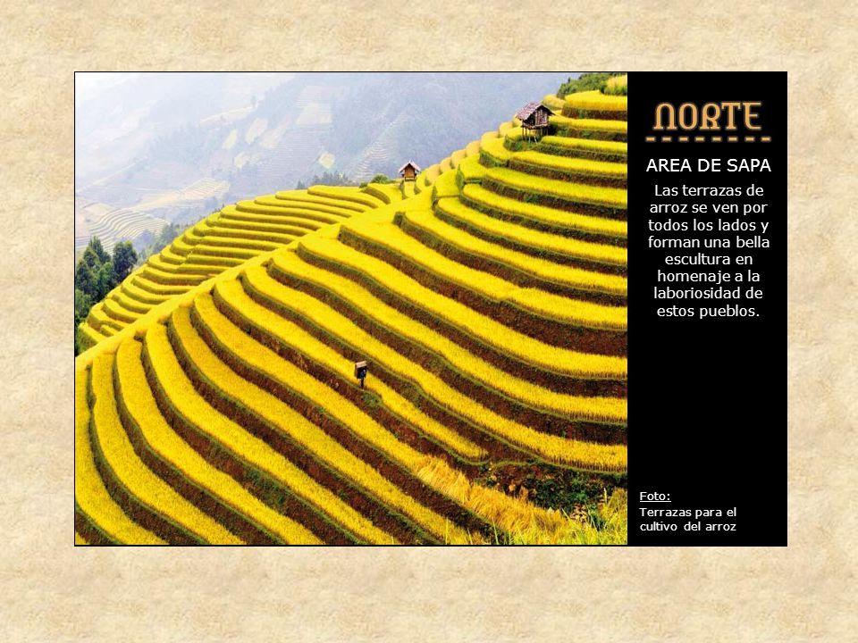 AREA DE SAPA Los alrededores, conocidos como Alpes Tonkineses tienen un valor extraordinario, tanto por la belleza de sus paisajes como por la diversidad de etnias y culturas que viven en ella Foto: Terrazas de arroz cerca de Sapa