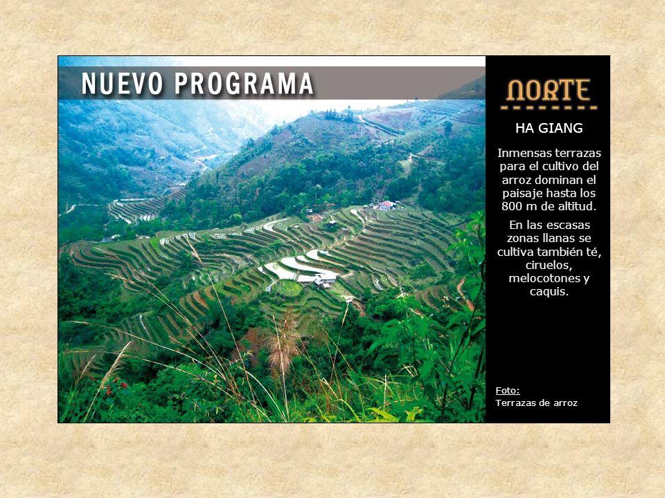 HA GIANG Inmensas terrazas para el cultivo del arroz dominan el paisaje hasta los 800 m de altitud.
