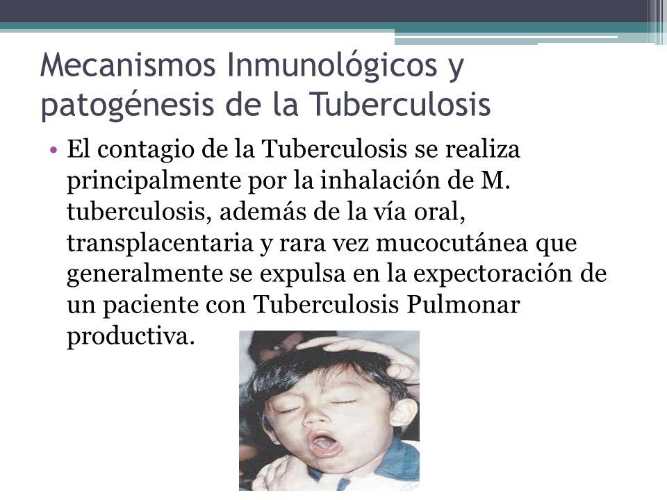 Mecanismos Inmunológicos y patogénesis de la Tuberculosis El contagio de la Tuberculosis se realiza principalmente por la inhalación de M. tuberculosi