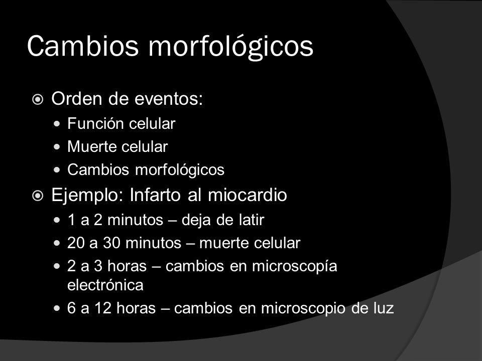 Cambios morfológicos Orden de eventos: Función celular Muerte celular Cambios morfológicos Ejemplo: Infarto al miocardio 1 a 2 minutos – deja de latir
