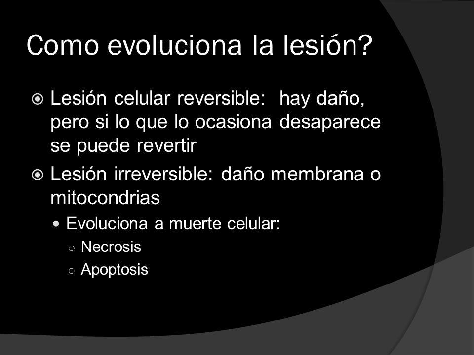 Como evoluciona la lesión? Lesión celular reversible: hay daño, pero si lo que lo ocasiona desaparece se puede revertir Lesión irreversible: daño memb