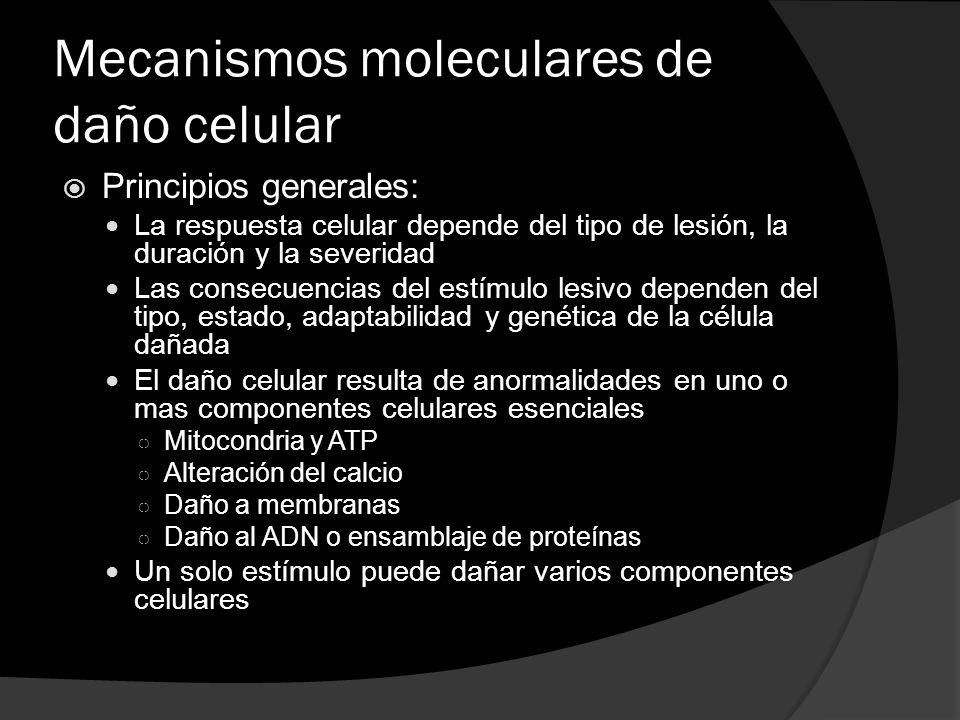 Mecanismos moleculares de daño celular Principios generales: La respuesta celular depende del tipo de lesión, la duración y la severidad Las consecuen
