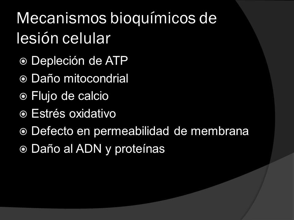 Mecanismos bioquímicos de lesión celular Depleción de ATP Daño mitocondrial Flujo de calcio Estrés oxidativo Defecto en permeabilidad de membrana Daño