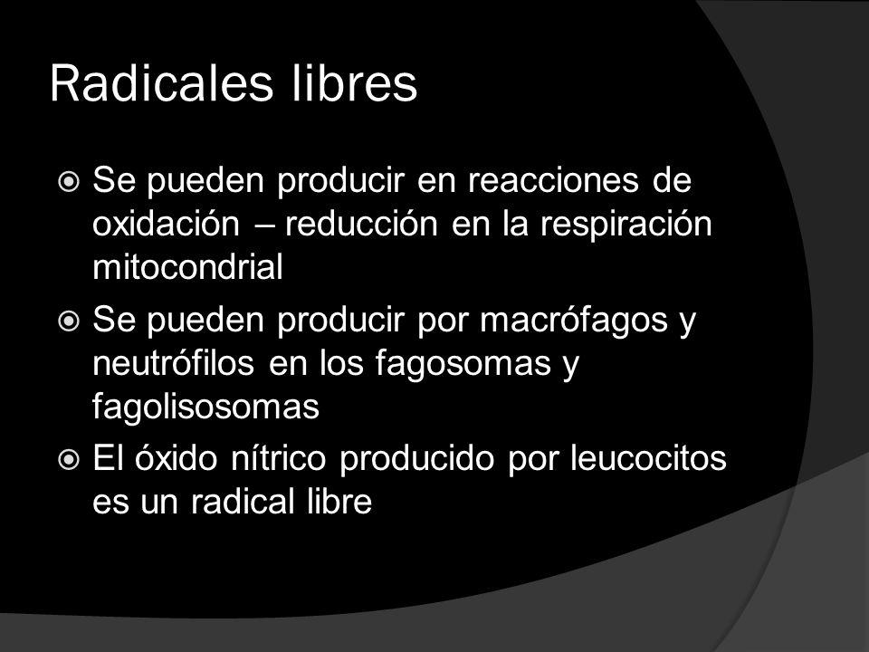 Radicales libres Se pueden producir en reacciones de oxidación – reducción en la respiración mitocondrial Se pueden producir por macrófagos y neutrófi