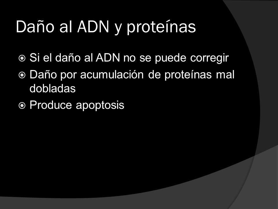 Daño al ADN y proteínas Si el daño al ADN no se puede corregir Daño por acumulación de proteínas mal dobladas Produce apoptosis