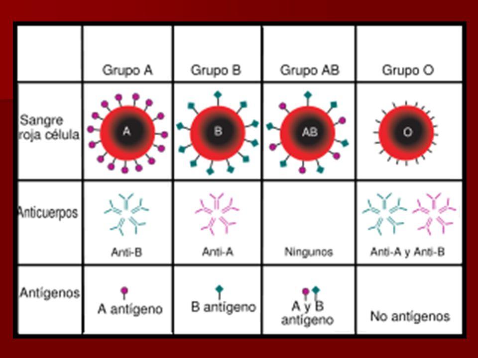 Características: -Las personas con sangre del tipo A tienen glóbulos rojos con antígenos de tipo A en su superficie y anticuerpos contra los antígenos B en el suero de su sangre.
