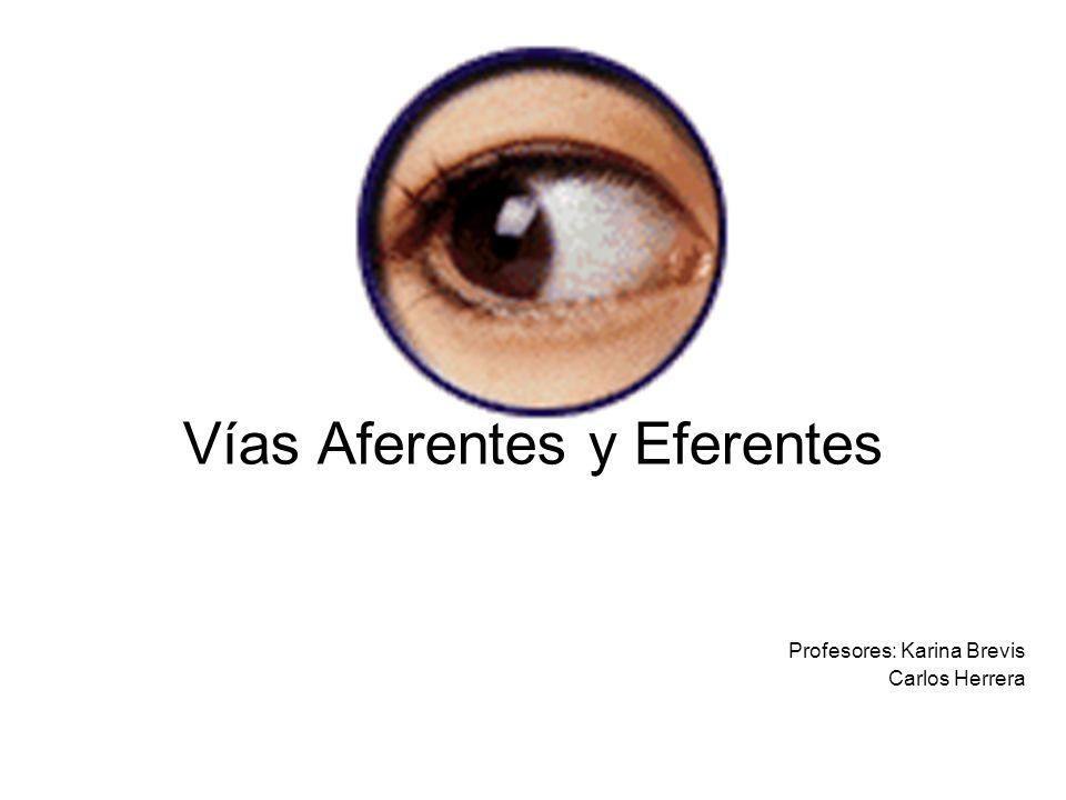 Vías Aferentes y Eferentes Profesores: Karina Brevis Carlos Herrera