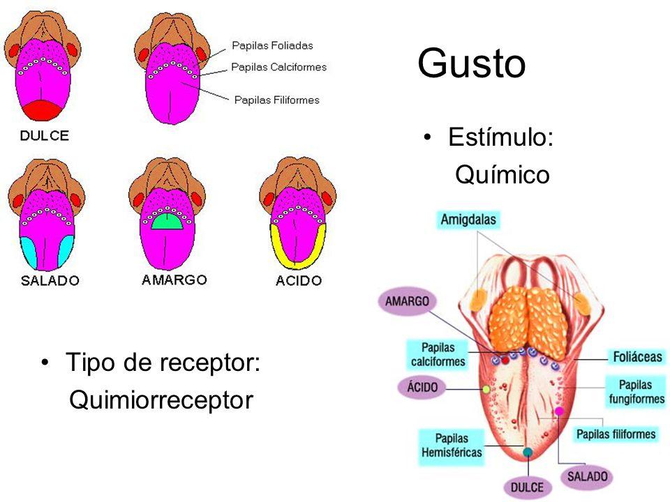 Gusto Tipo de receptor: Quimiorreceptor Estímulo: Químico