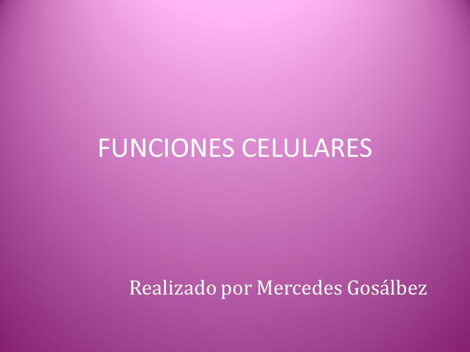 FUNCIONES CELULARES Realizado por Mercedes Gosálbez