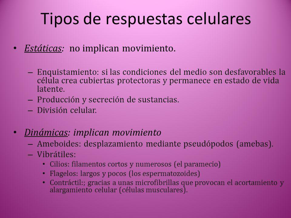 Tipos de respuestas celulares Estáticas: no implican movimiento. – Enquistamiento: si las condiciones del medio son desfavorables la célula crea cubie