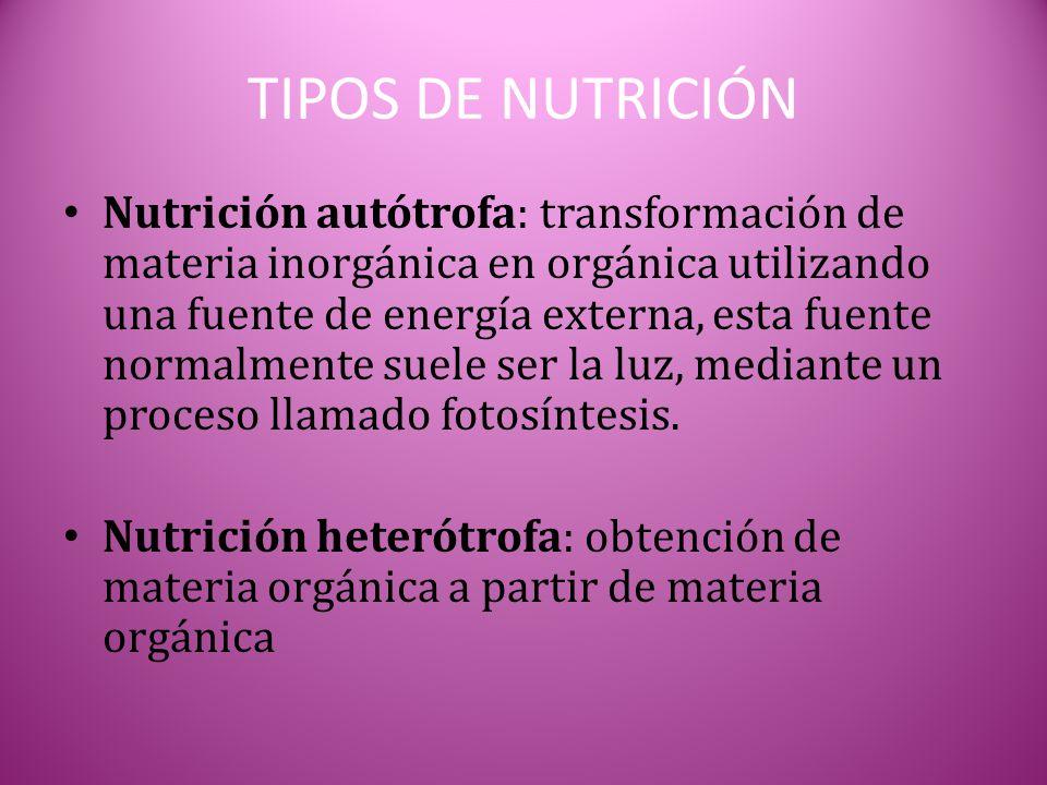 TIPOS DE NUTRICIÓN Nutrición autótrofa: transformación de materia inorgánica en orgánica utilizando una fuente de energía externa, esta fuente normalm