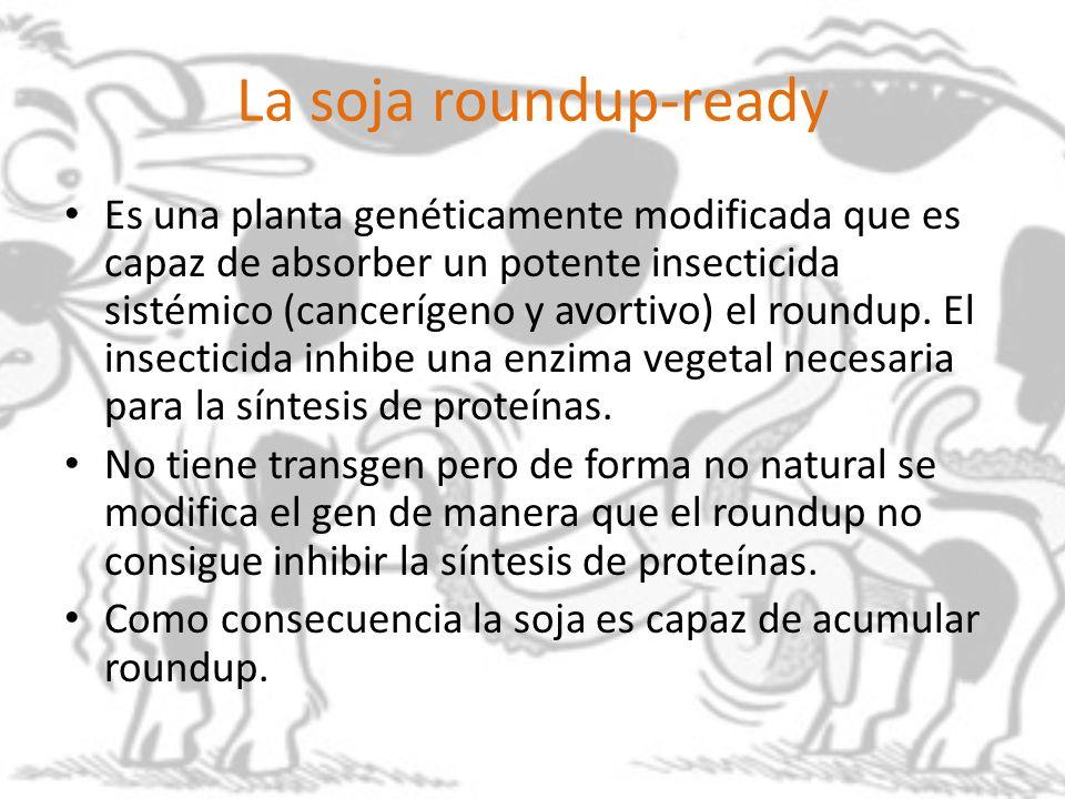 La soja roundup-ready Es una planta genéticamente modificada que es capaz de absorber un potente insecticida sistémico (cancerígeno y avortivo) el rou