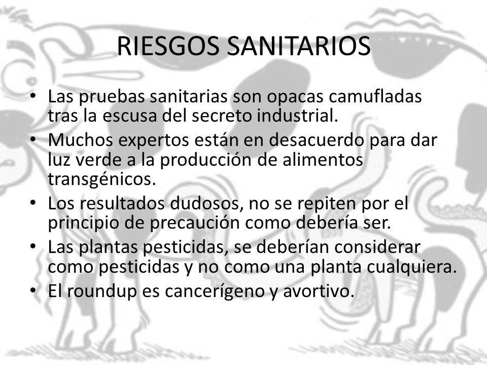 RIESGOS SANITARIOS Las pruebas sanitarias son opacas camufladas tras la escusa del secreto industrial. Muchos expertos están en desacuerdo para dar lu