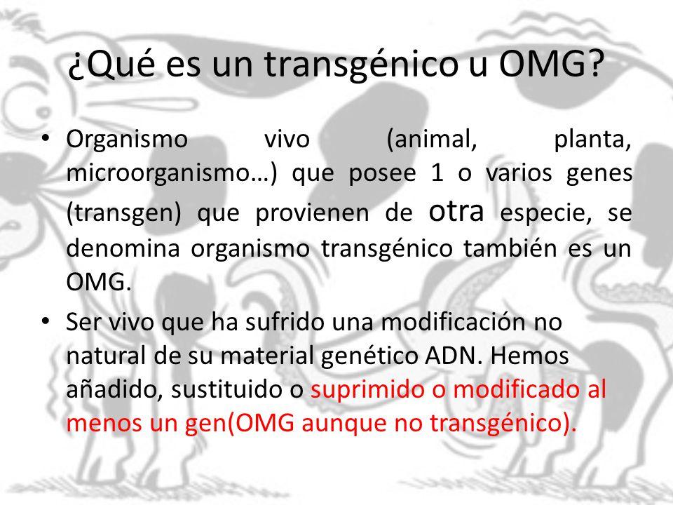 ¿Qué es un transgénico u OMG? Organismo vivo (animal, planta, microorganismo…) que posee 1 o varios genes (transgen) que provienen de otra especie, se