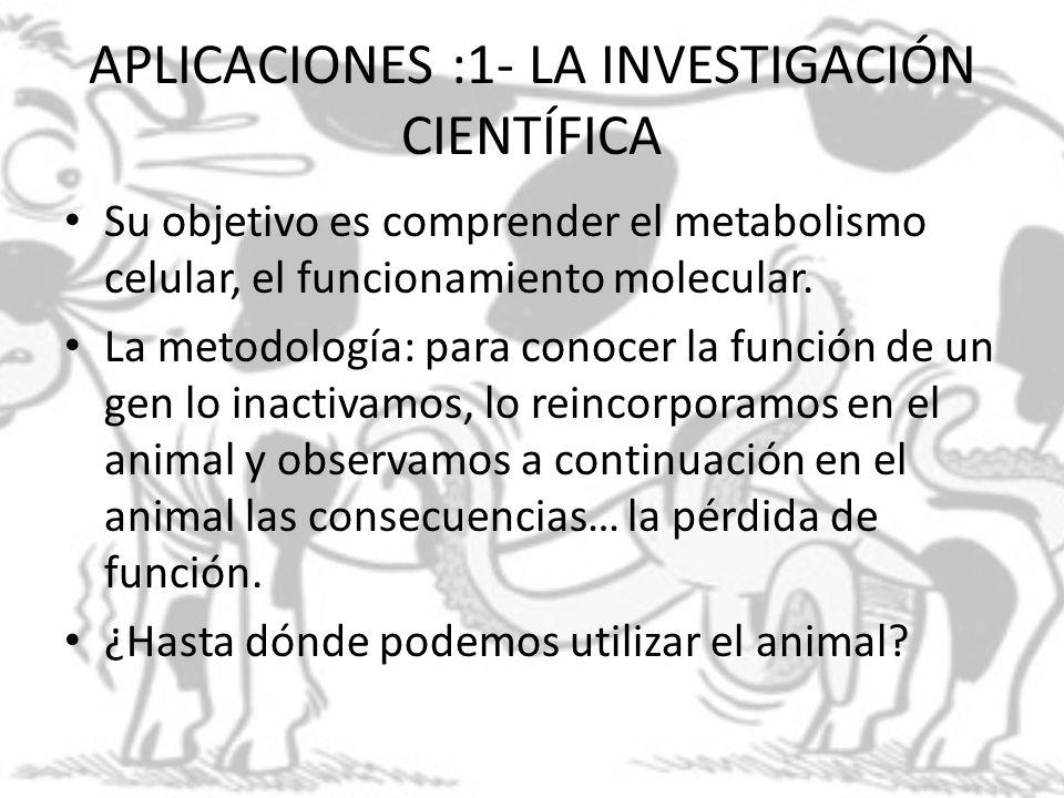 APLICACIONES :1- LA INVESTIGACIÓN CIENTÍFICA Su objetivo es comprender el metabolismo celular, el funcionamiento molecular. La metodología: para conoc
