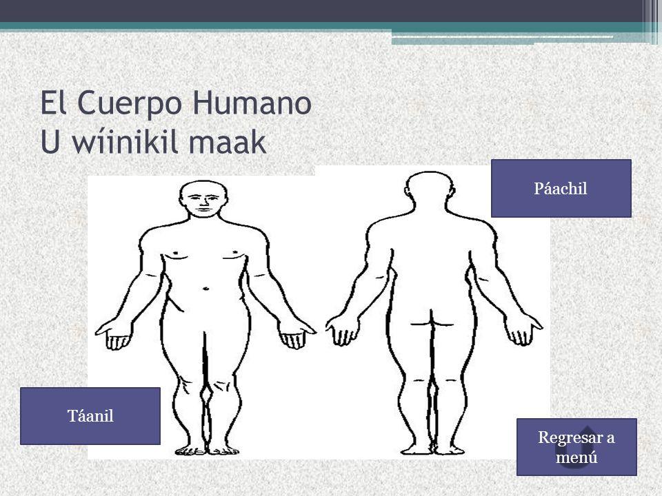 Menú El Cuerpo Humano Parte superior del cuerpo Parte Media del cuerpo Extremidades del cuerpo Ejercicios Canción del cuerpo humano en maya Glosario Salir del curso