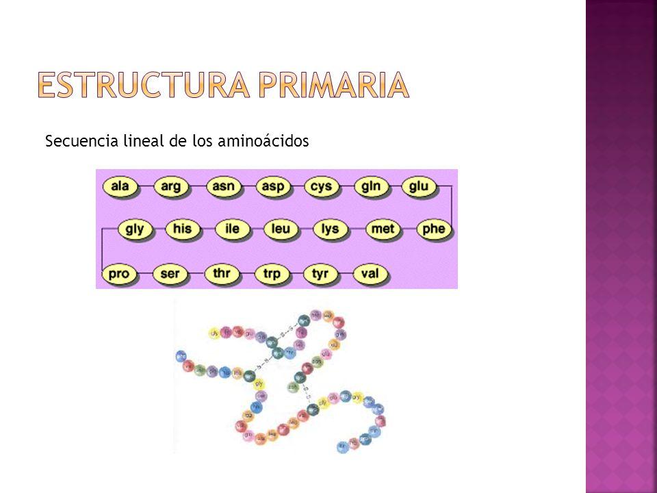 Secuencia lineal de los aminoácidos