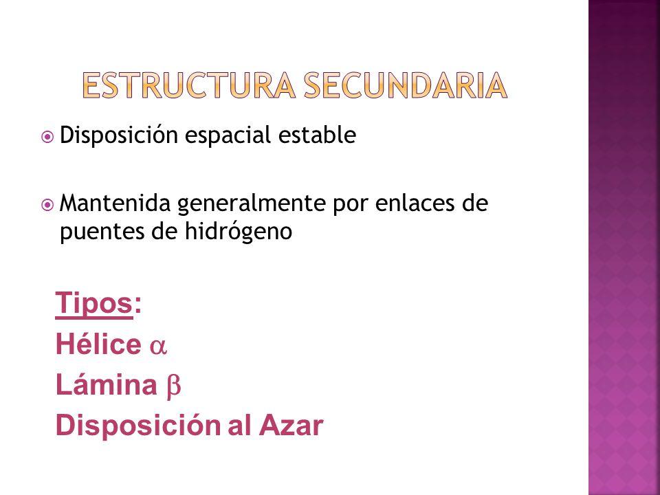 Disposición espacial estable Mantenida generalmente por enlaces de puentes de hidrógeno Tipos: Hélice Lámina Disposición al Azar