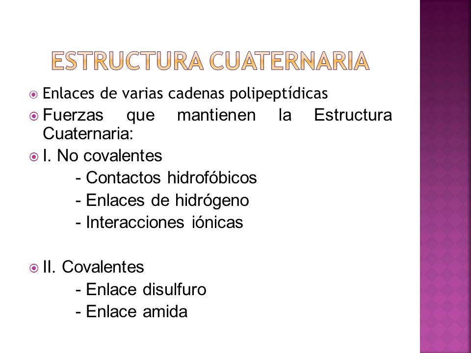 Enlaces de varias cadenas polipeptídicas Fuerzas que mantienen la Estructura Cuaternaria: I.