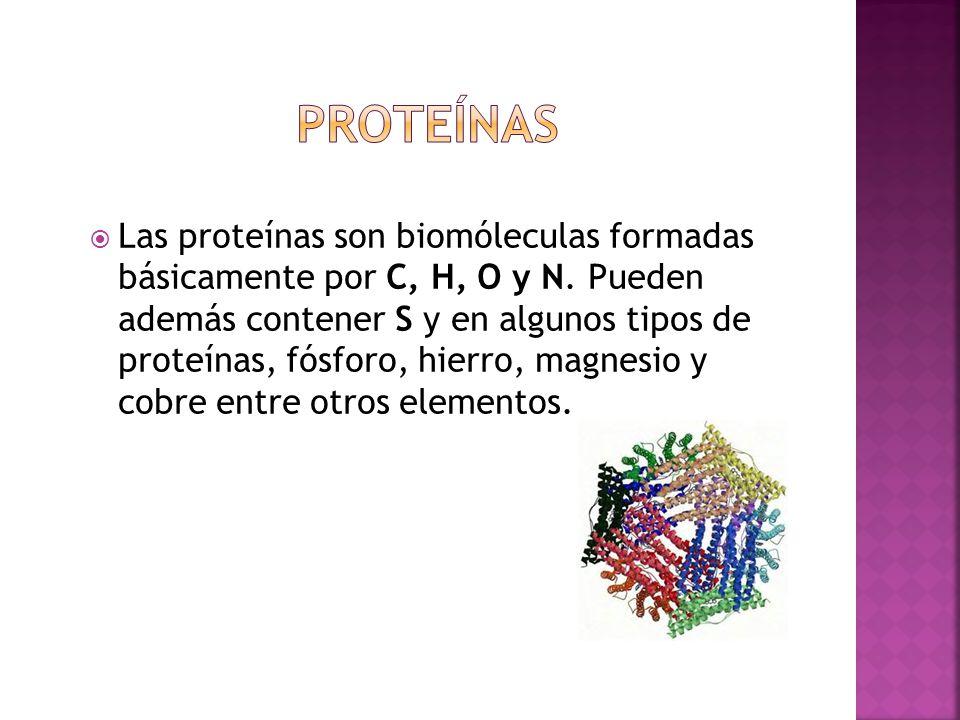 Las proteínas son biomóleculas formadas básicamente por C, H, O y N.