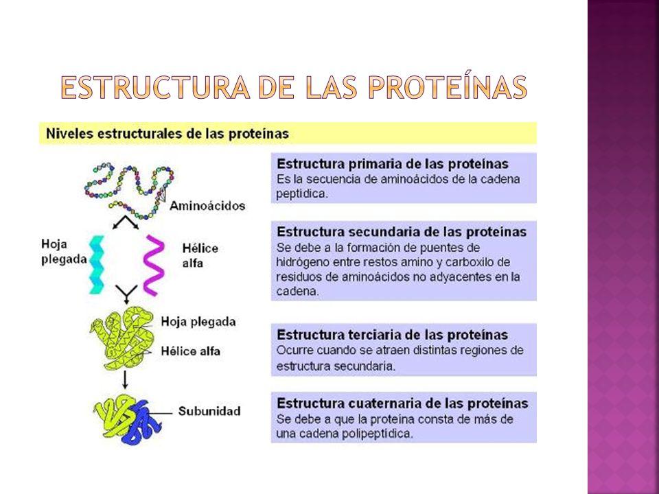 Pérdida de todas las estructuras de orden superior (secundaria, terciaria y cuaternaria) quedando la proteína reducida a un polímero lineal Causas Consecuencias inmediatas: - Disminución de solubilidad y precipitación - Pérdida de funciones biológicas
