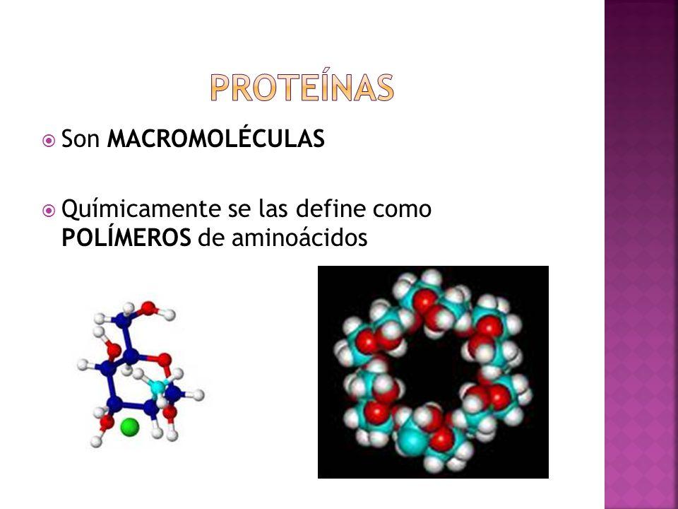 Son MACROMOLÉCULAS Químicamente se las define como POLÍMEROS de aminoácidos