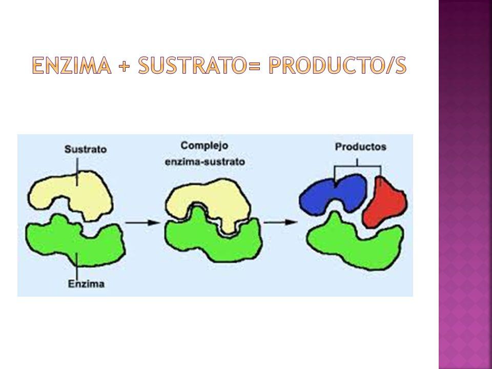 Nombre del sustrato + sufijo asa (ureasa, a milasa, lipasa, etc) Designación en función del tipo de reacción catalizada (deshidrogenasas, descarboxilasas, etc.) Nombres arbitrarios (ptialina salival, tripsina, etc.)