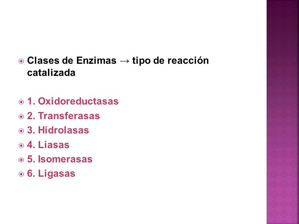 Clases de Enzimas tipo de reacción catalizada 1. Oxidoreductasas 2. Transferasas 3. Hidrolasas 4. Liasas 5. Isomerasas 6. Ligasas