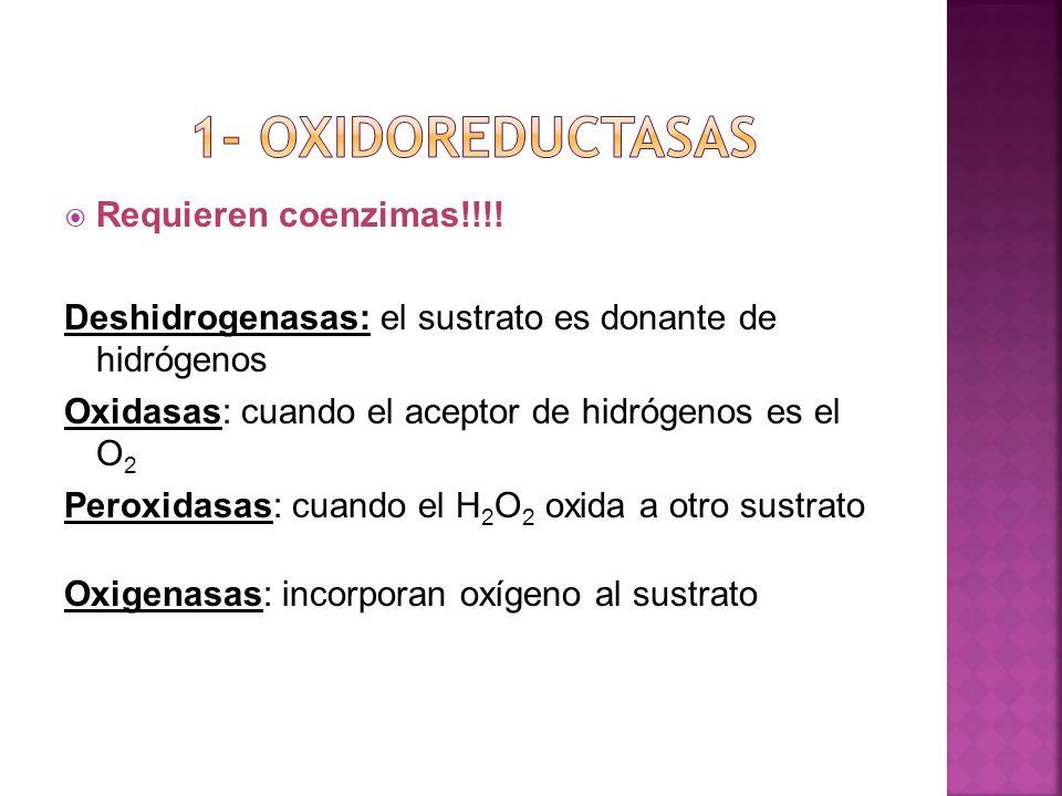 Requieren coenzimas!!!! Deshidrogenasas: el sustrato es donante de hidrógenos Oxidasas: cuando el aceptor de hidrógenos es el O 2 Peroxidasas: cuando