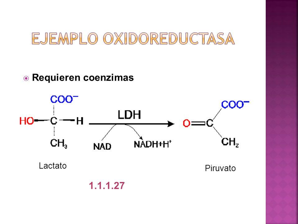 Requieren coenzimas Lactato Piruvato 1.1.1.27
