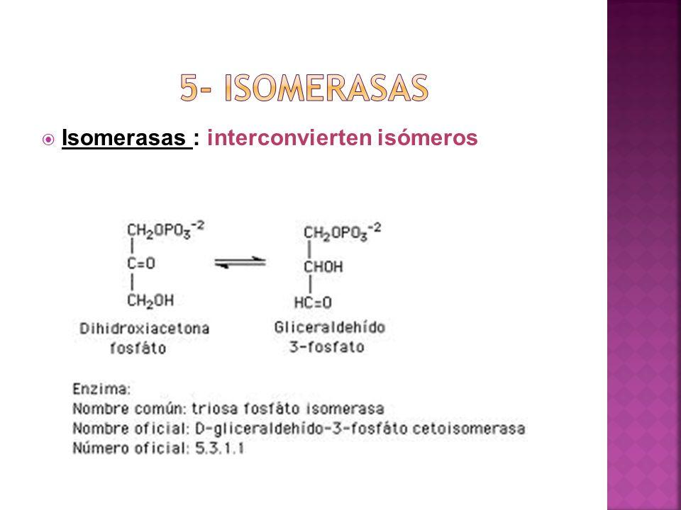 Isomerasas : interconvierten isómeros