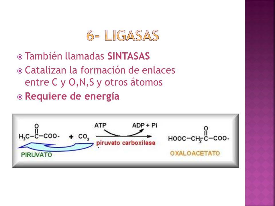 También llamadas SINTASAS Catalizan la formación de enlaces entre C y O,N,S y otros átomos Requiere de energía