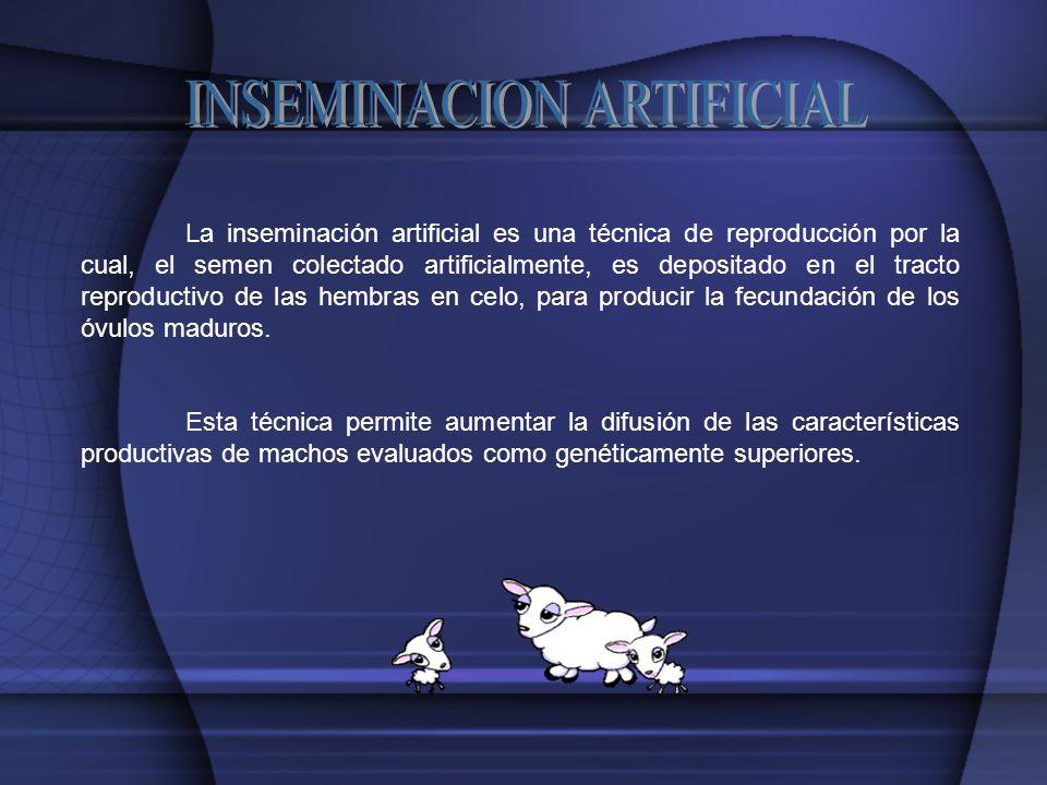 La inseminación artificial es una técnica de reproducción por la cual, el semen colectado artificialmente, es depositado en el tracto reproductivo de las hembras en celo, para producir la fecundación de los óvulos maduros.