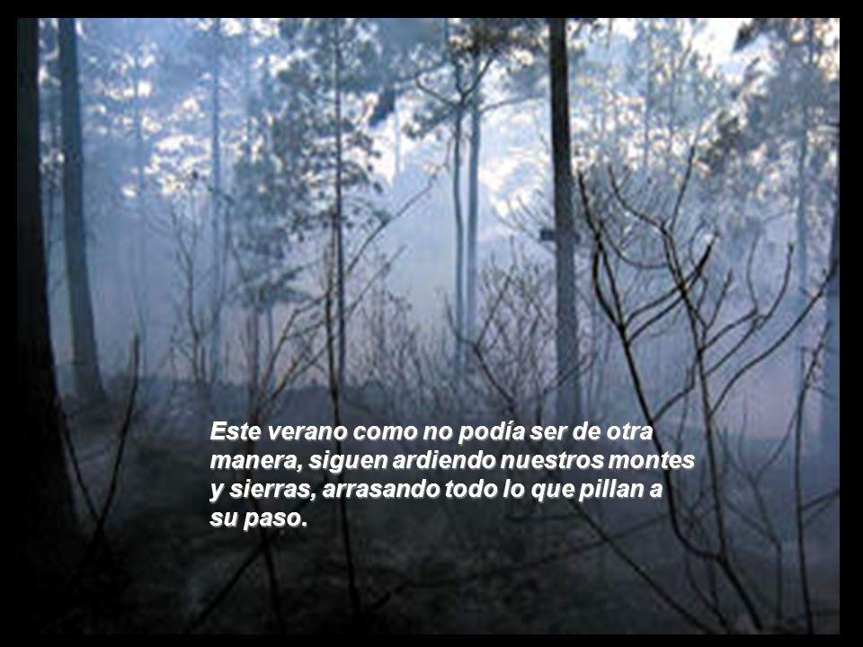 Como siempre al comienzo del verano, los incendios forestales aparecen puntuales como si de una plaga se tratara.