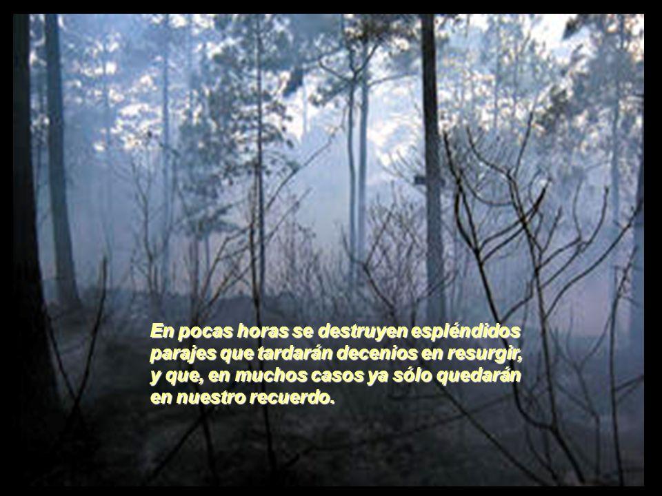 Este verano como no podía ser de otra manera, siguen ardiendo nuestros montes y sierras, arrasando todo lo que pillan a su paso.