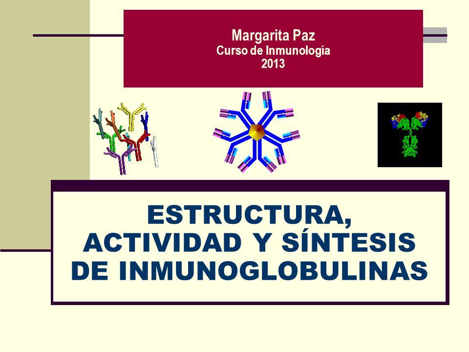 ESTRUCTURA, ACTIVIDAD Y SÍNTESIS DE INMUNOGLOBULINAS Margarita Paz Curso de Inmunología 2013