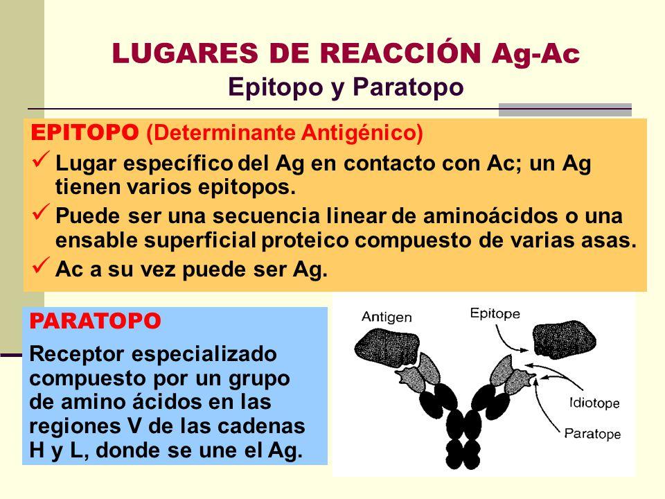 LUGARES DE REACCIÓN Ag-Ac Epitopo y Paratopo EPITOPO (Determinante Antigénico) Lugar específico del Ag en contacto con Ac; un Ag tienen varios epitopo