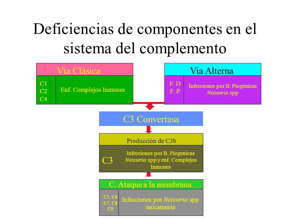 Deficiencias de componentes en el sistema del complemento C3 Convertasa C5, C6 C7, C8 C9 C. Ataque a la membrana Infecciones por Neisseria spp únicame