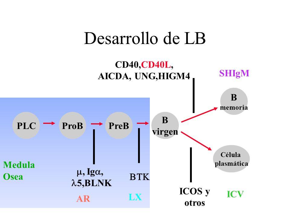 Medula Osea Desarrollo de LB PLCProBPreB B virgen Célula plasmática B memoria, Ig, 5,BLNK ICOS y otros CD40,CD40L, AICDA, UNG,HIGM4 SHIgM ICV LX AR