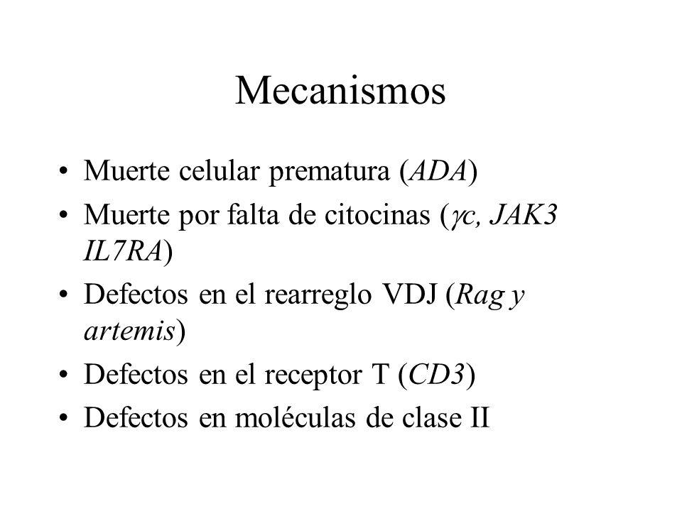 Mecanismos Muerte celular prematura (ADA) Muerte por falta de citocinas ( c, JAK3 IL7RA) Defectos en el rearreglo VDJ (Rag y artemis) Defectos en el r