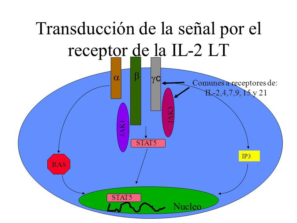 Transducción de la señal por el receptor de la IL-2 LT Nucleo STAT5 RAS IP3 JAK1 JAK3 c Comunes a receptores de: IL-2,4,7,9, 15 y 21