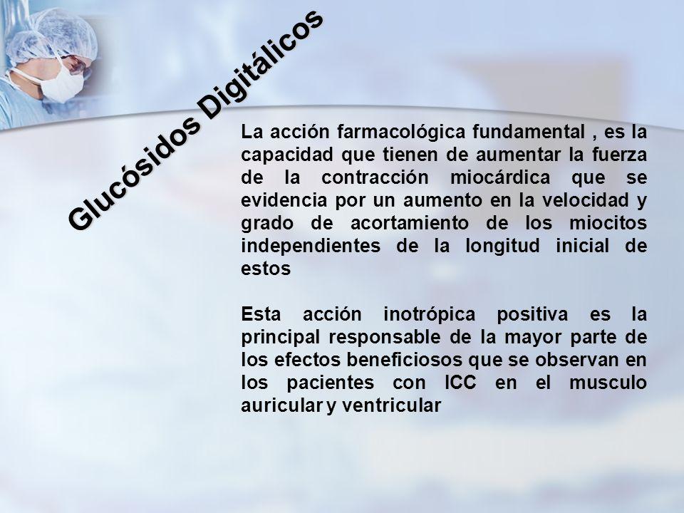 Glucósidos Digitálicos La acción farmacológica fundamental, es la capacidad que tienen de aumentar la fuerza de la contracción miocárdica que se evide