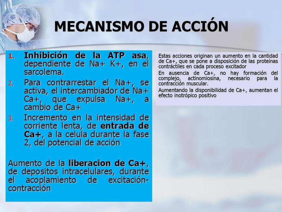 MECANISMO DE ACCIÓN 1. Inhibición de la ATP asa, dependiente de Na+ K+, en el sarcolema. 2. Para contrarrestar el Na+, se activa, el intercambiador de
