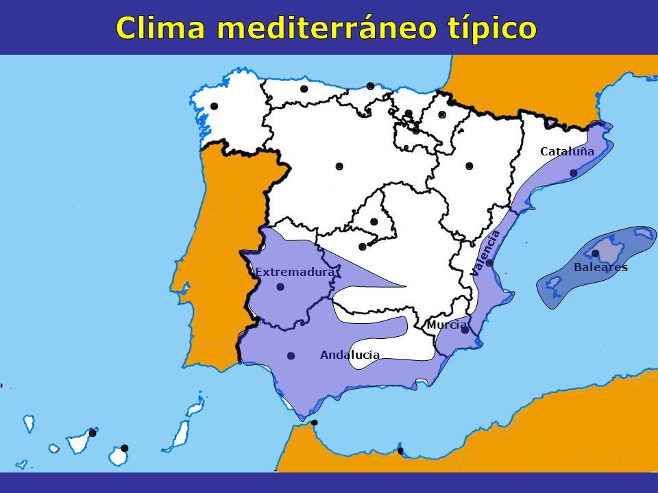 El CLIMA MEDITERRÁNEO TÍPICO Cataluña Valencia Murcia Andalucía Extremadura Características Se extiende por Temperaturas suaves En invierno en torno a los 12º Veranos calurosos media de 27º Precipitaciones escasas Sobre todo en verano No superan los 600 l / m 2 Vegetación Bosque mediterráneo Árboles Encinas, alcornoques, pinos y robles en zonas más húmedas Arbustos Carrascas, jaras, tomillo, espliego, retama, romero Islas Baleares