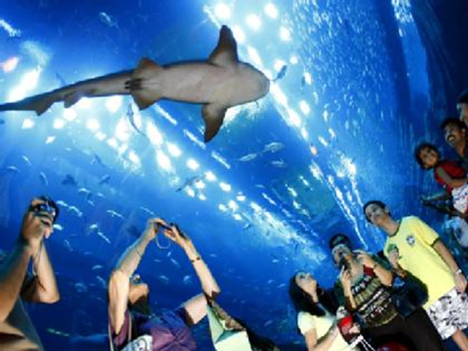 Os tubos dentro do aquário Pasillos dentro del acuario