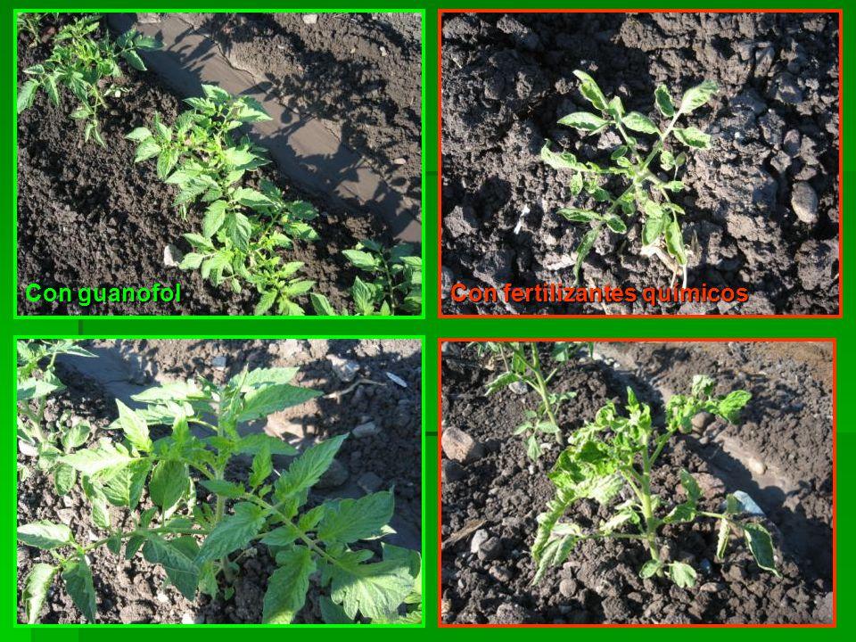 guanofol Con guanofol Con fertilizantes químicos