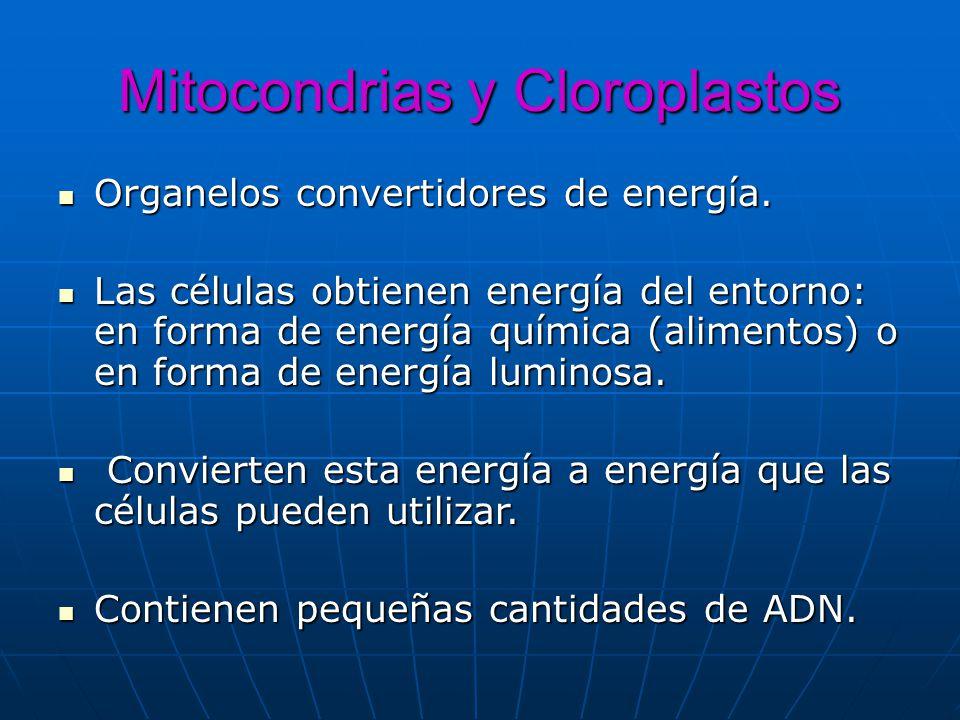 Mitocondrias y Cloroplastos Organelos convertidores de energía. Organelos convertidores de energía. Las células obtienen energía del entorno: en forma