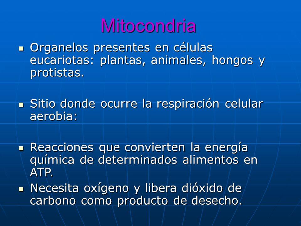 Mitocondria Organelos presentes en células eucariotas: plantas, animales, hongos y protistas. Organelos presentes en células eucariotas: plantas, anim