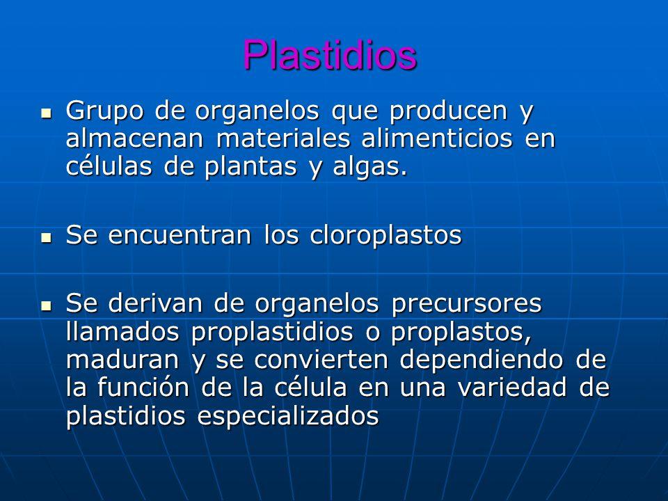Plastidios Grupo de organelos que producen y almacenan materiales alimenticios en células de plantas y algas. Grupo de organelos que producen y almace